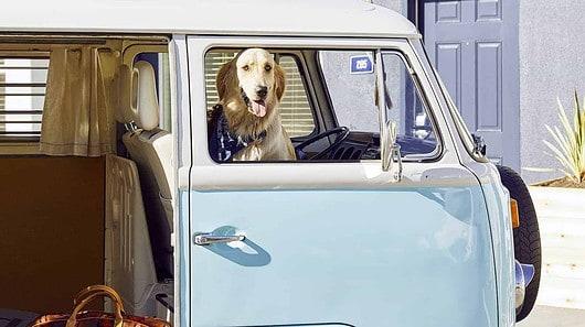 Dog checking into lodging