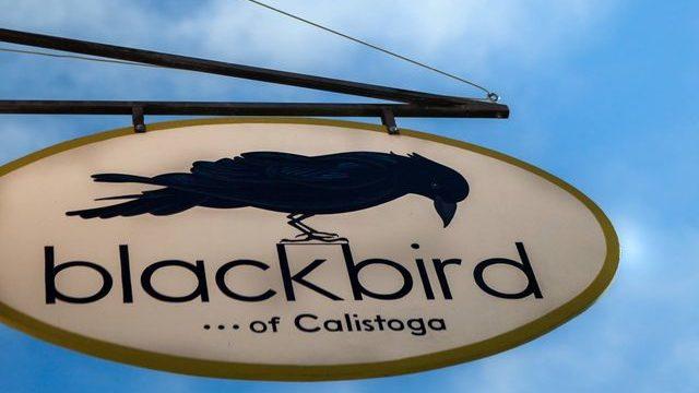 Blackbird of Calistoga