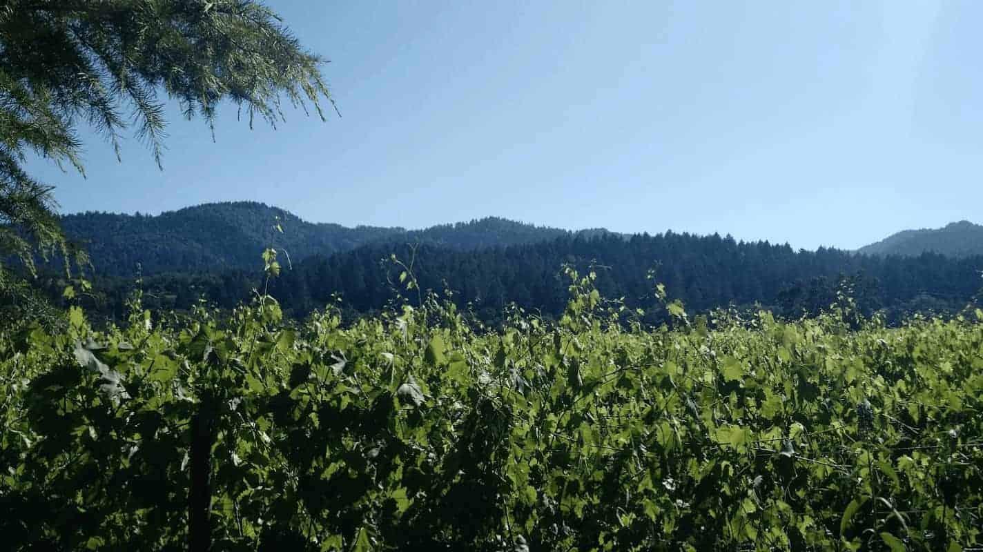 Helena View Johnston Vineyards