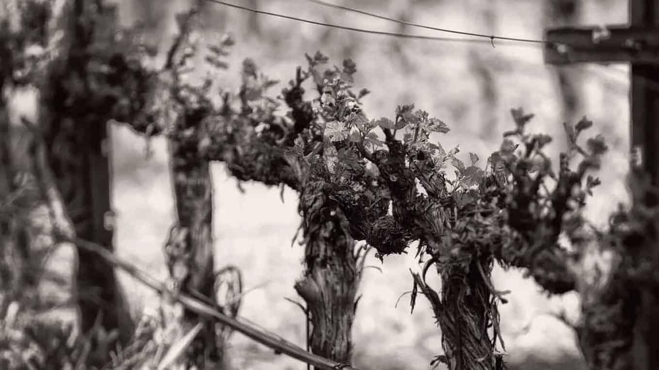 Homage Wines