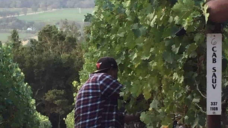Jones Family Vineyards