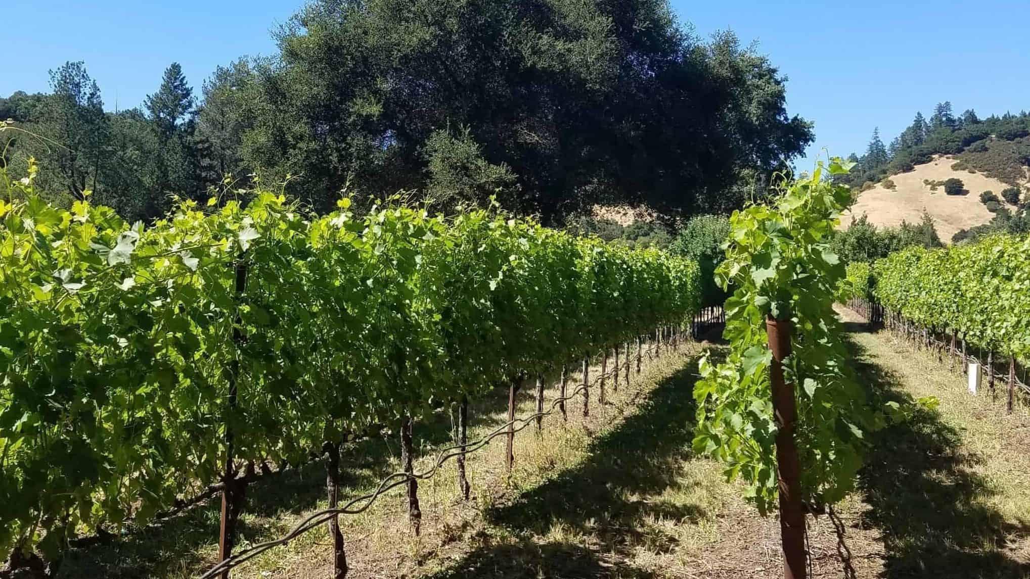 Lawer Estates Winery