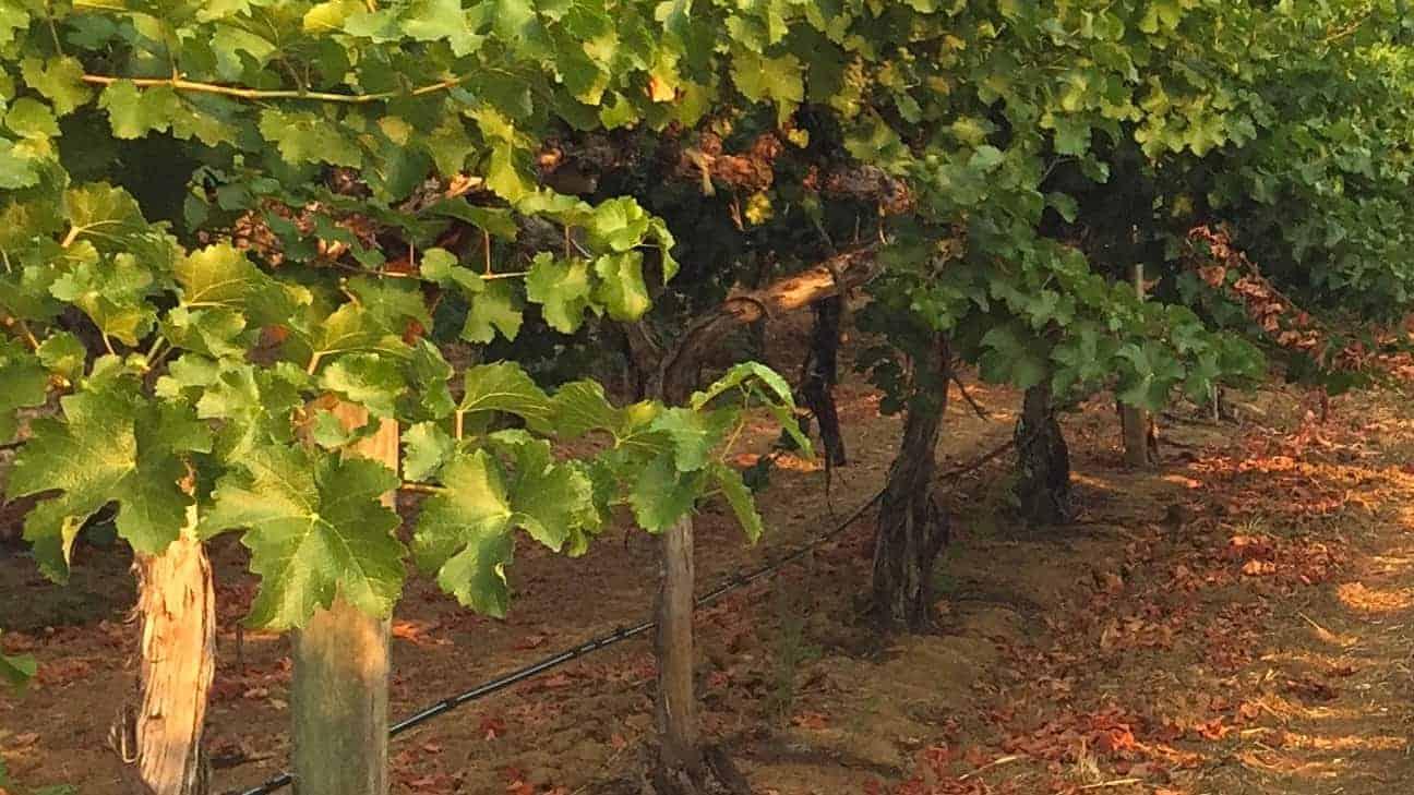 Olabisi Wines