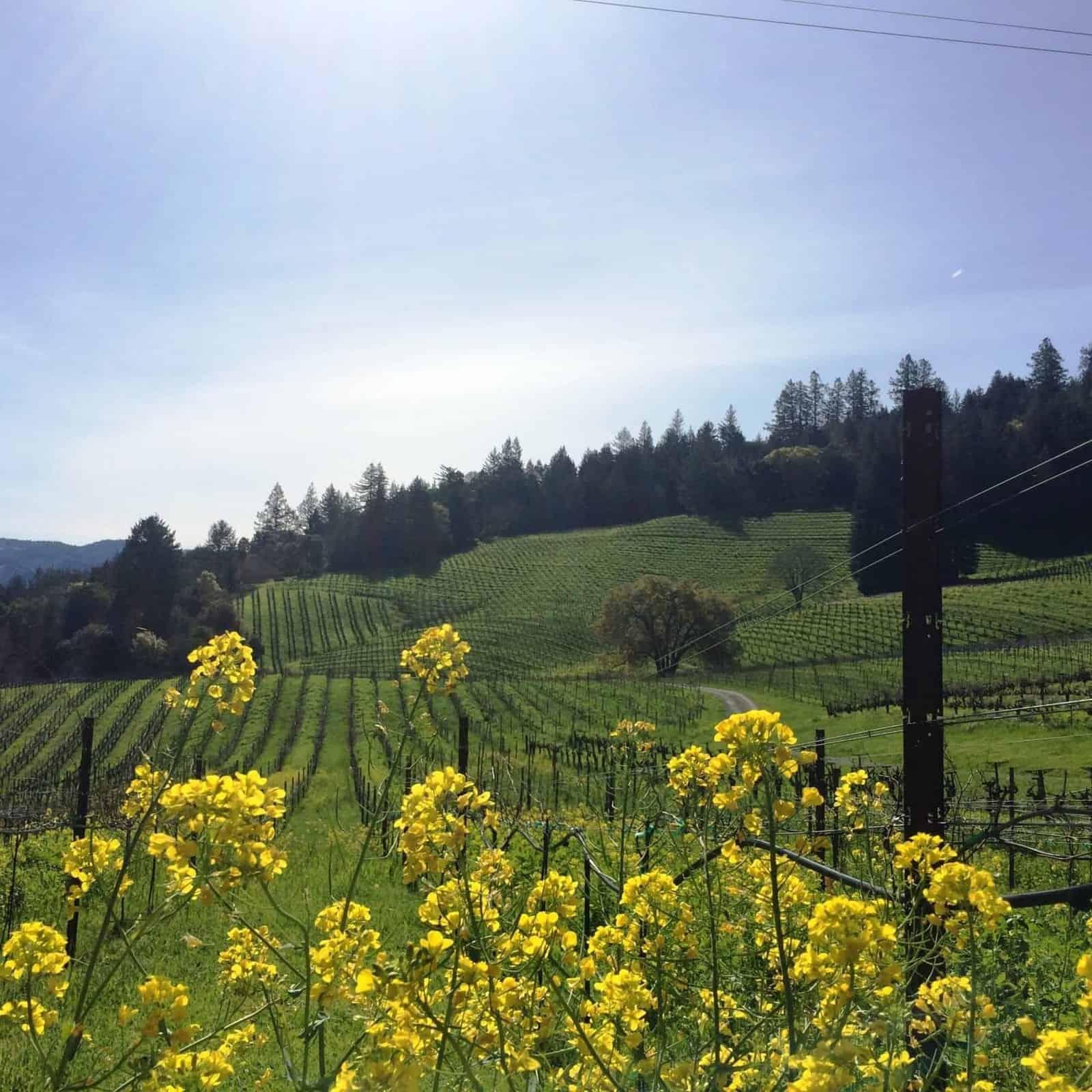 Storybook Mountain Vineyards